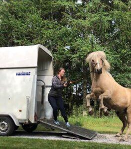 Traumatiseret hest