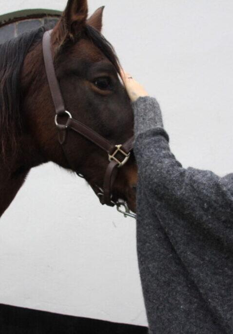Telepati-hest