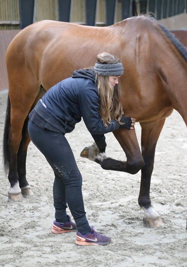Equine Touch